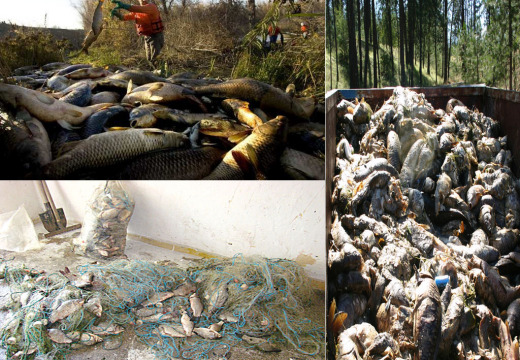 L'ecocidio dei fiumi italiani di Emilia, Veneto e Lombardia